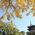 Photos: 銀杏と五重塔