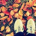 Photos: 足下の秋