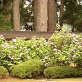 Photos: 30-和歌山 高野山 高野山にて-20040712-57