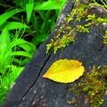 初夏の落ち葉