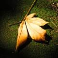 Photos: 落ち葉と緑