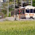 写真: 新緑を走る