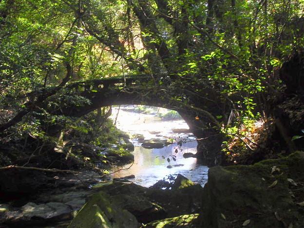 橋上の人影