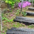 Photos: 春の階段
