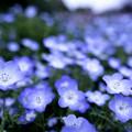 Photos: Blue world