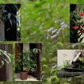写真: 優しいお庭