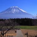 写真: たおやかな富士♪