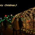 写真: Merry  Christmas♪