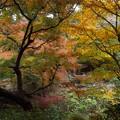 写真: 秋の徳明園