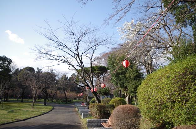 里見公園桜まつり前