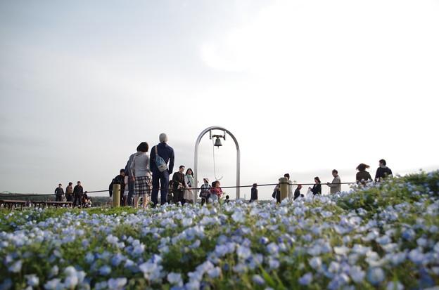 ひたち海浜公園 (9)