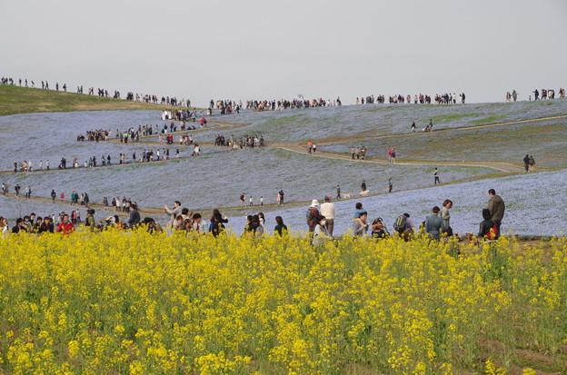 ひたち海浜公園 (2)
