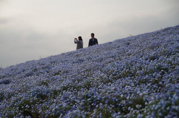 ひたち海浜公園 (4)