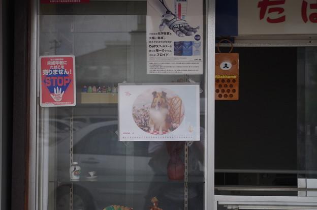 タバコ屋のおじちゃんと看板犬 (2)