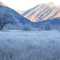 Photos: 霧氷「戦場ヶ原」