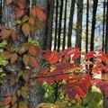 Photos: 林の中の秋