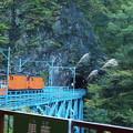 写真: 立山トロッコ電車