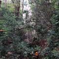 等々力渓谷から環八の近くに登る階段