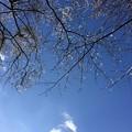 Photos: 春の音