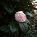 Photos: pink