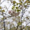 Photos: ウコンの花が咲いていた~