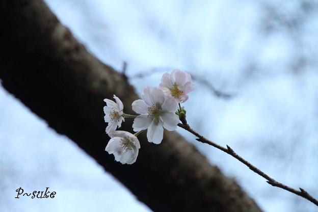 秋を探して桜を発見・・・