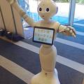 Photos: ソフトバンク名古屋店にいた、ロボット「Pepper」 - 07