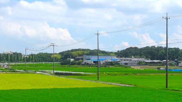 田んぼの中に並んで佇む電信柱の列