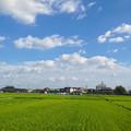 写真: 夏らしい青空と雲、たわわに田んぼの実った稲 - 1