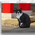 Mac OS X Mavericks:複数画像選択してQuickLook - 1(進む・戻ると一覧表示ボタン)