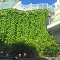 写真: オアシス21の壁面緑化 - 1