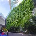 写真: オアシス21の壁面緑化 - 4