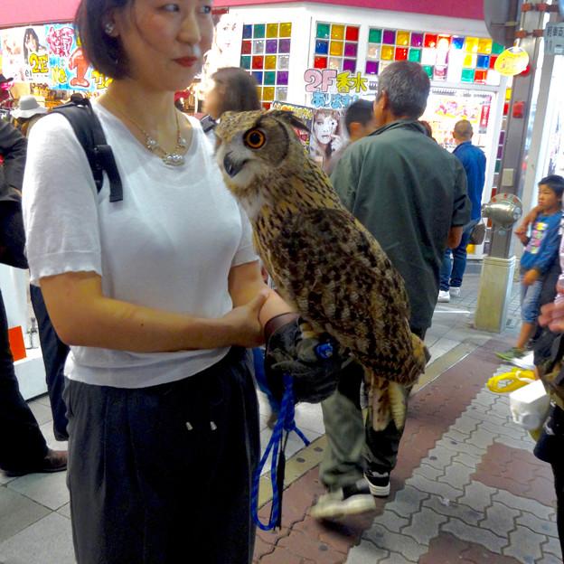 大須商店街:アニマルカフェ「The Zoo」をPRする「ワシミミズク」 - 1