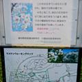 Photos: 初秋の小幡緑地 No - 36:絶滅危惧種である「マメナシ」の群生地(説明)