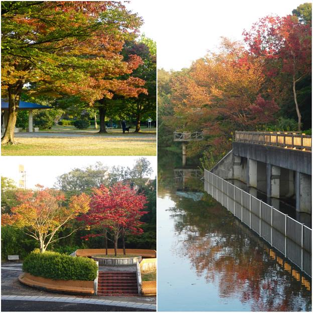 初秋の小幡緑地 No - 42:紅葉した木々
