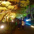 写真: 東山動植物園 紅葉ライトアップ 2015 No - 74