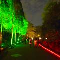 写真: 東山動植物園 紅葉ライトアップ 2015 No - 80