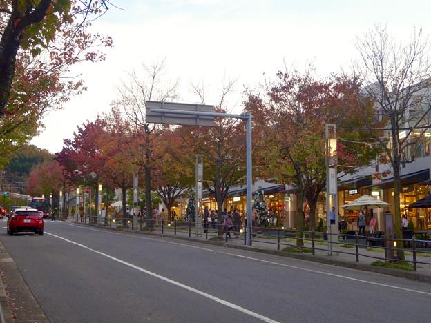 Photos: 街路樹が赤く染まってた、秋の星が丘テラス - 1