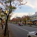 Photos: 街路樹が赤く染まってた、秋の星が丘テラス - 2