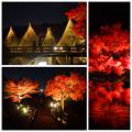 写真: 白鳥庭園の紅葉ライトアップ 2015(まとめ)No - 1
