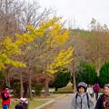 写真: 大高緑地公園 No - 4:紅葉した木々