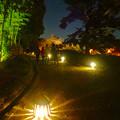 写真: 白鳥庭園「紅葉ライトアップ 2015」No - 80:ライトアップされた竹林