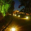 写真: 白鳥庭園「紅葉ライトアップ 2015」No - 81:ライトアップされた竹林