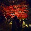 写真: 白鳥庭園「紅葉ライトアップ 2015」No - 90
