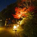 写真: 白鳥庭園「紅葉ライトアップ 2015」No - 96:紅葉と美濃和紙あかりアート