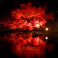 写真: 白鳥庭園「紅葉ライトアップ 2015」No - 118:池に反射する真っ赤なモミジ