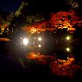 写真: 白鳥庭園「紅葉ライトアップ 2015」No - 121