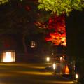 白鳥庭園「紅葉ライトアップ 2015」No - 217:美濃和紙あかりアートで照らされた道