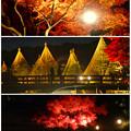 写真: 白鳥庭園「紅葉ライトアップ 2015」No - 222:紅葉、雪吊り、池の反射
