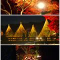 写真: 白鳥庭園「紅葉ライトアップ 2015」No - 223:紅葉、雪吊り、美濃和紙あかりアート